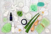 Aloe vera skin care including plant stems,  moisturiser, facial cream, body lotion, natural seashell poster
