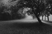 Black And White Spooky Mysterious Landscape Scene With Garden Forest Trees On A Foggy Morning. poster