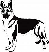 image of german shepherd  - german shepherd dog vector illustration on white background - JPG