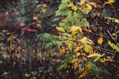 Orange Yellow Autumn Leaves On Bokeh Background. Scenic Fall Rich Flora In Dark Forest. Colorful Fol poster