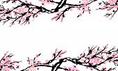 Cherry Blossom Spring Floral Template With Hand Drawnes Branch With Red Cherry Flowers Blooming.  Sa poster