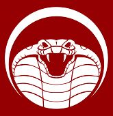 stock photo of king cobra  - cobra emblem  - JPG