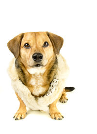 foto of gangsta  - gangsta rapper dog in the white background - JPG