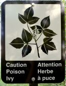 stock photo of english ivy  - A sign in a public park warning of the presence of poison ivy in both French and English - JPG