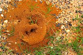 stock photo of fire ant  - Ants nest with green grass in the nature - JPG