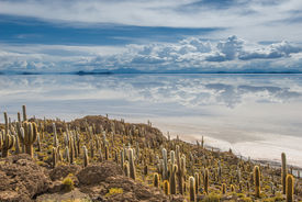 picture of peyote  - Highly detailed image of Incahuasi island Salar de Uyuni Bolivia - JPG