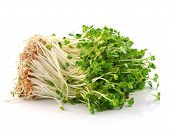 image of bean sprouts  - fresh Bean Sprouts isolated  ona  White Background - JPG