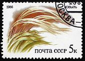 Postage Stamp Russia 1986 Grass, Flora Of Russian Steppes