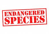 image of endangered species  - ENDANGERED SPECIES red Rubber Stamp over a white background - JPG