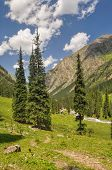 picture of shan  - Picturesque view of coniferous trees in Tian - JPG