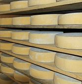 stock photo of milkman  - major forms of aged cheese in the dairy of a mountain hut - JPG