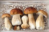 picture of picking tray  - Fresh boletus mushrooms on a wooden tray - JPG