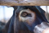 stock photo of horses ass  - the head of a young donkey in the park - JPG