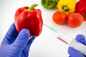 picture of genetic engineering  - Man with gloves working with pepper in genetic engineering laboratory - JPG