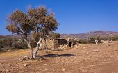 image of semi-arid  - Farm animal shelter and olive trees in a semi - JPG