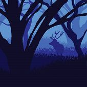picture of moonlight  - Silhouette deer in the forest in moonlight - JPG