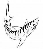 image of aquatic animal  - animal fish tiger shark marine acean predator vector - JPG