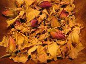 foto of magickal  - Closeup dried rose petals - JPG