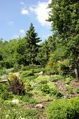 image of naturalist  - Alpine garden in  - JPG