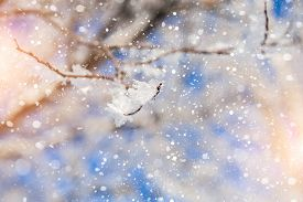 picture of winter trees  - Snow covered tree and snowfall - JPG
