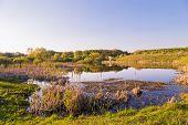 stock photo of bulrushes  - lake blue grass bulrush water sky green - JPG