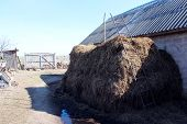 foto of excrement  - big heap of the dung besides the shed - JPG