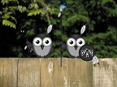 stock photo of bird fence  - Comical Native American bird hunting party perched on a timber garden fence against a foliage background - JPG