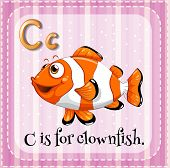 pic of clown fish  - Flashcard letter C is for clown fish - JPG