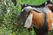 picture of eat grass  - Close - JPG