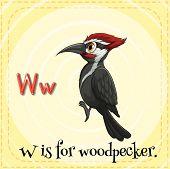 picture of woodpecker  - Flashcard letter W is for woodpecker - JPG