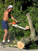 picture of arborist  - Man operates a chainsaw to cut through trunk of a large oak tree - JPG
