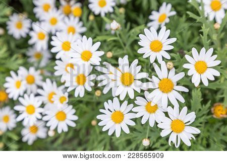 Flower In Garden At Sunny Summer Or Spring Day Flower For Postcard
