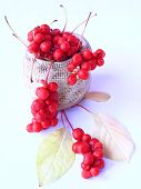 Schisandra Red In Ceramic Bag. Red Ripe Schizandra In Bucket. Five Flavor Berry. Fresh Red Ripe Berr poster