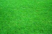 image of football field  - Football - JPG