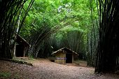 picture of annal  - Old home at center of bamboo trees - JPG