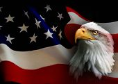 stock photo of eagles  - American Bald Eagle and American flag combined - JPG