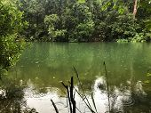 Peaceful green lake surrounded by lush tropical forest with light rain. poster