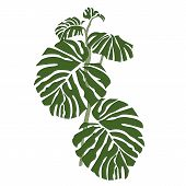 Green Botany Tropical Leaves Forest Tree Jungle poster