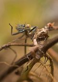 Damselfly waving on twisted stems