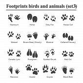 Wildlife Animals And Birds Footprint, Animal Paw Prints Vector Set. Footprints Of Variety Of Animals poster