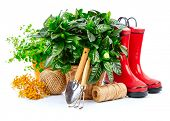 Green bush with flowers in basket red boots and garden tools spring branch mimosa gardening, isolate poster