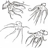 picture of devilfish  - Vector Set of octopuses - JPG