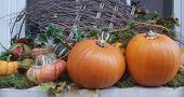 Decor With Pumpkin. Halloween Decorations. Autumn Pumpkin Outdoor Decor. Different Color And Size Pu poster