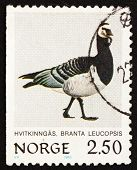 Postage stamp Norway 1983 Barnacle Goose, Branta Leucopsis, Bird