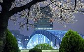 stock photo of cherry-blossom  - night city scenery with blossom cherry branch over metallic Eitai bridge in Tokyo Metropolis; focus on tree branches