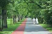 Two Old Women Are Walking In Park With Treadmill. Two Elderly Women Walk In Summer Park. Elderly Peo poster