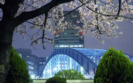 stock photo of cherry blossoms  - night city scenery with blossom cherry branch over metallic Eitai bridge in Tokyo Metropolis; focus on tree branches ** Note: Slight blurriness, best at smaller sizes - JPG