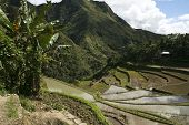 picture of ifugao  - ancient rice terraces of batad in northern luzon the philippines - JPG