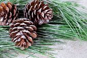 christmas fir tree with pinecones on a wooden background