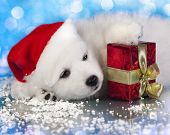 stock photo of christmas dog  - white puppy with a gift in paws - JPG
